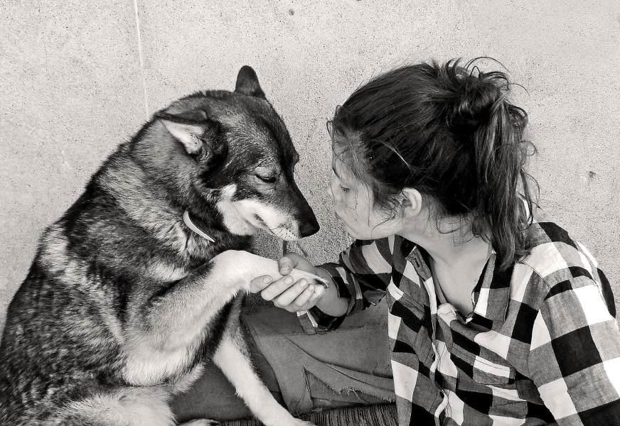 Vzdelávanie detí v zodpovednom vzťahu k zvieratám a v prevencii úrazov psami