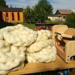 ovcie runo a kolovratok
